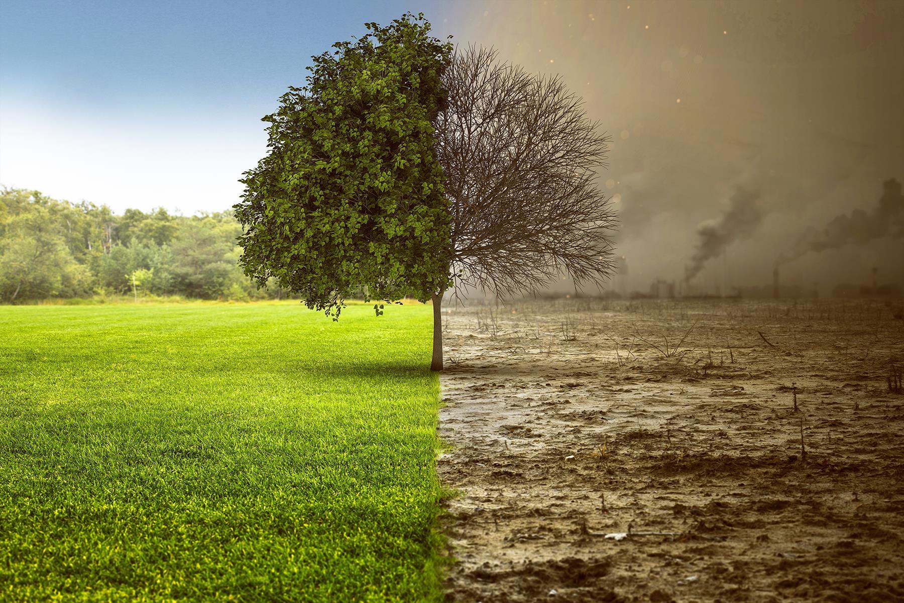 Картинка с климатом